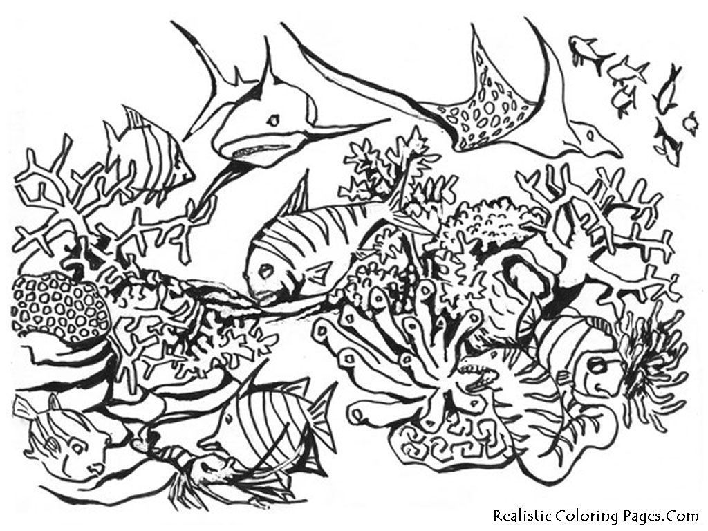 Lovely Realistic Coloring Pages 13 realistic animals coloring pages
