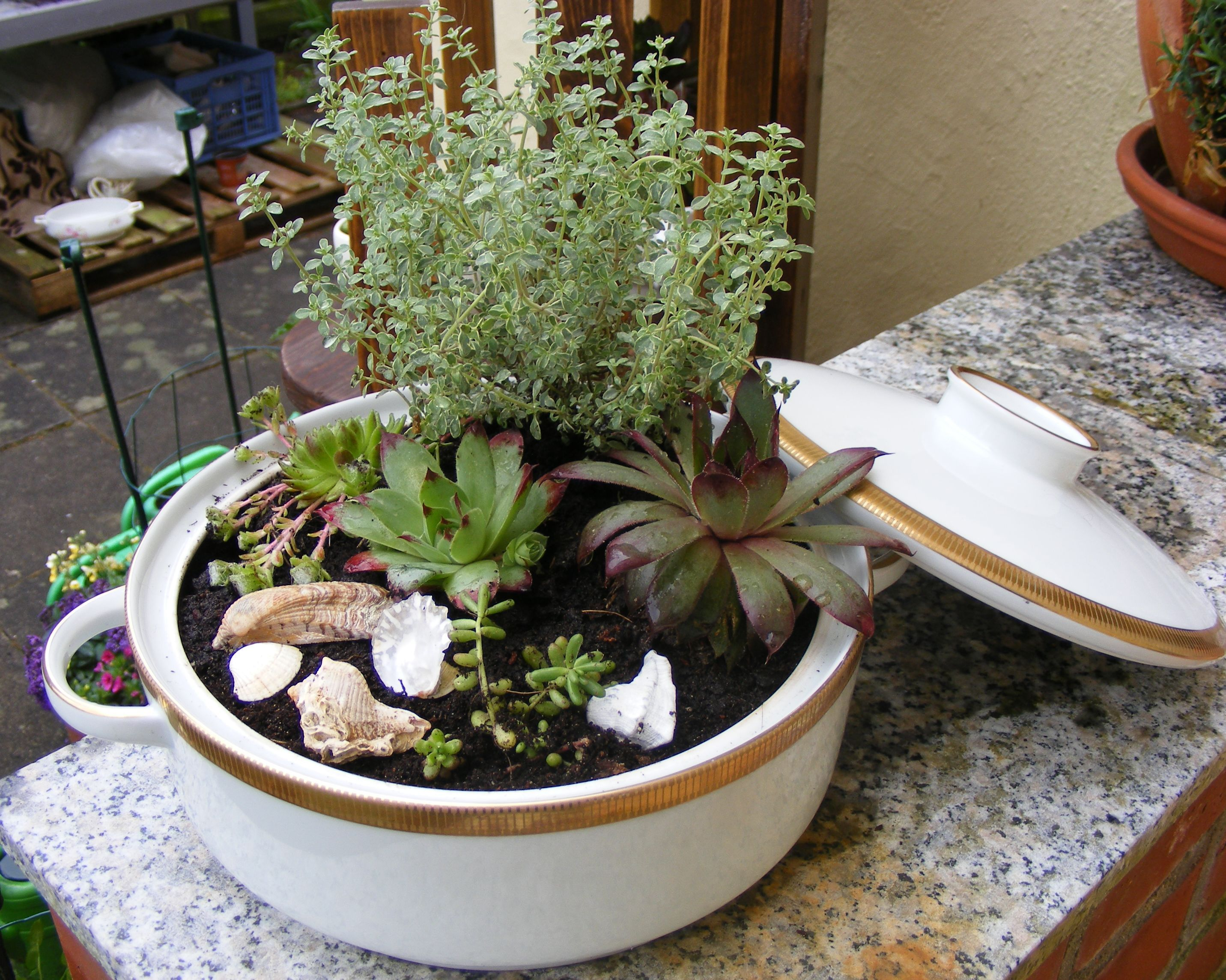 Minigarten in einer suppensch ssel bepflanzt mit thymian - Zinkwanne dekorieren ...
