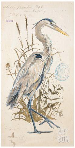 Great Blue Heron Art Print by Chad Barrett at Art.com
