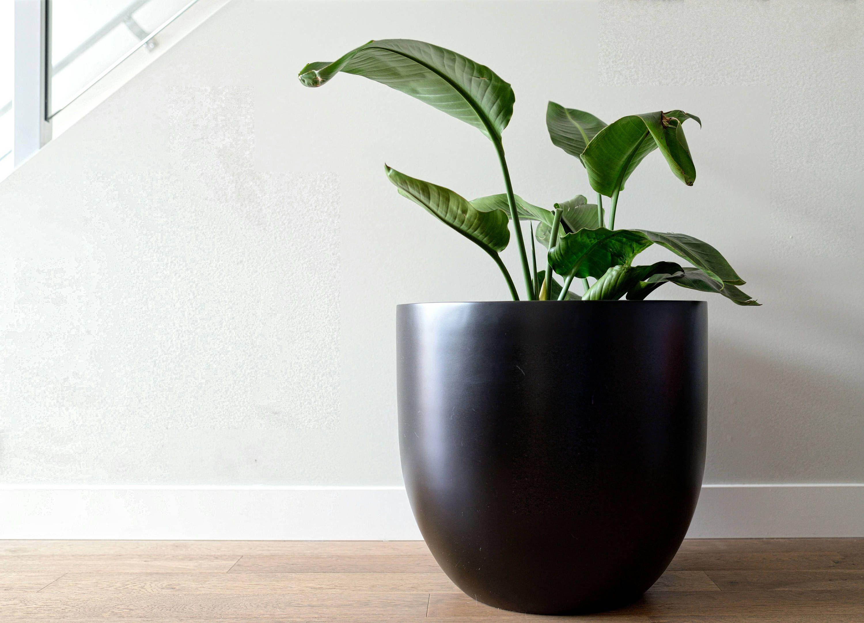 Matte Black Planter P*T Indoor Outdoor Modern 640 x 480