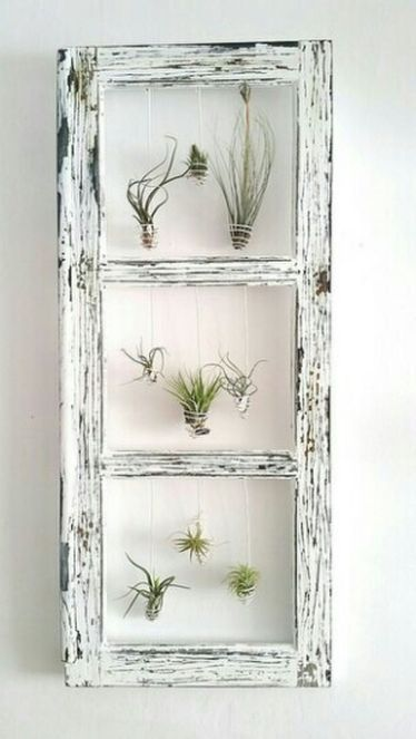 Air Plants DIY Ideas In Home8