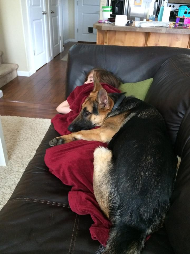 19 Reasons German Shepherds Are Actually The Worst Dogs To Live