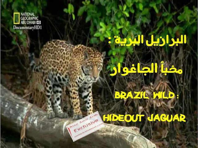 مدونة أمير العرب Blog Amir Arab البرازيل البرية مخبأ الجاغوار Wild Untamed Brazil وثائقي مشوق عن أحد أجمل جنات الأرض و أجم National Geographic Laos Brazil