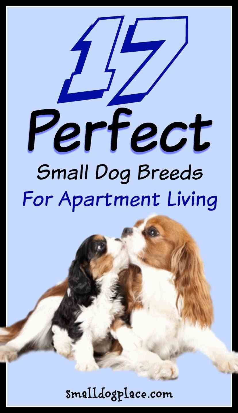 The Best Breeds For Apartment Living All Small Dog That
