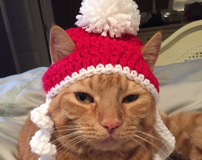 Crochet Christmas Santa Beanie Hat For Cat or Small Dog | Pet things ...