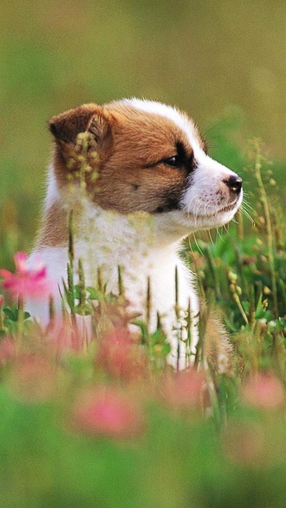 Puppy cute puppies wallpapers for iphone animals dog - Phone animal wallpapers ...