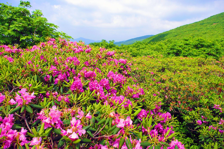 Craggy Gardens Blue Ridge Parkway North Carolina