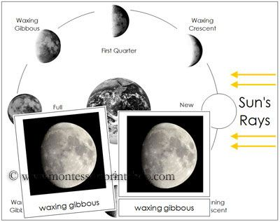 12++ Liveable moon phases worksheet pdf info