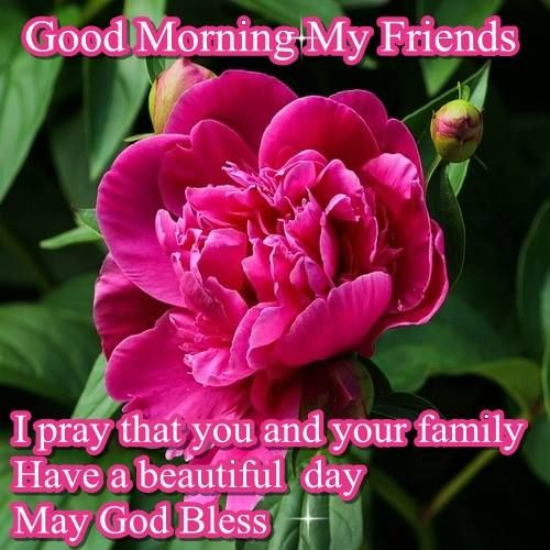 good morning my sweet friend wwwpixsharkcom images