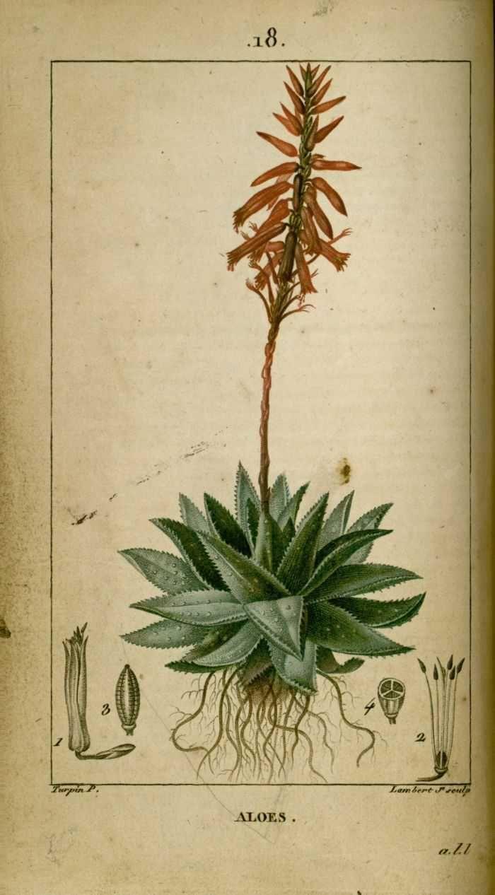Pin Von Tifoo Auf Plantes Illustration Botanique Dessins