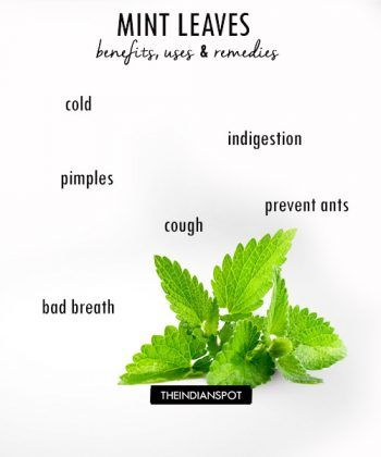 BENEFITS USES AND REMEDIES OF MINT LEAVES | Mint leaves ...
