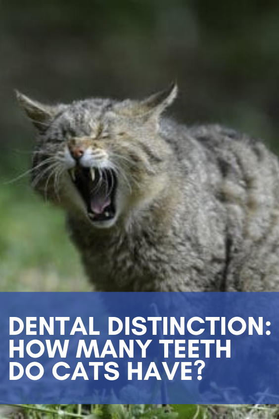 Dental Distinction How Many Teeth Do Cats Have? in 2020