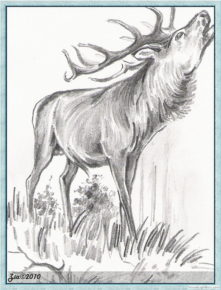 Vysledek Obrazku Pro Srnec Kresba Red Deer Drawing Painting