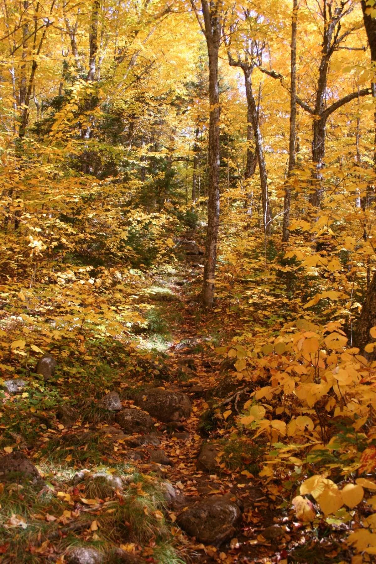 Sentier, Massif Bigelow, Maine, USA, octobre 2016