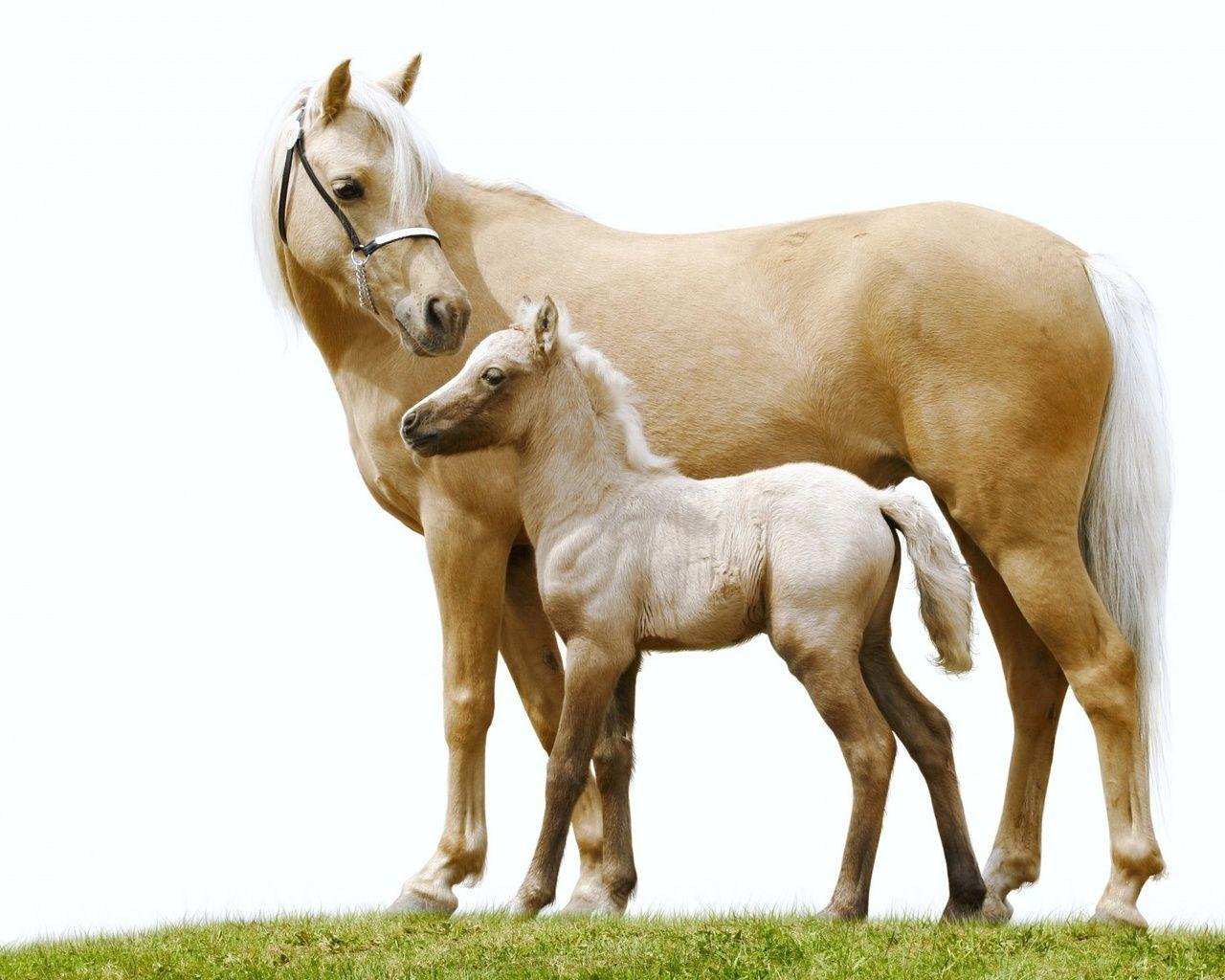 Обои лошадь, жеребёнок. Животные foto 18