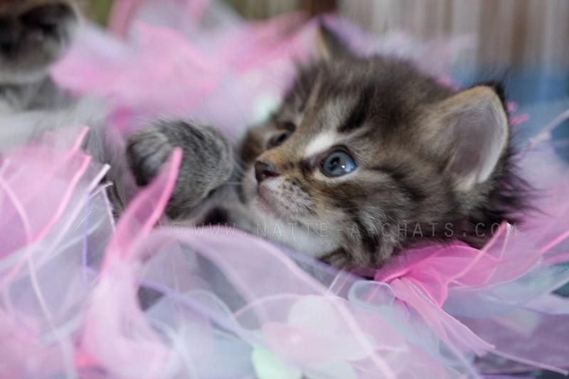 Image chat les plus belles photos de chats les chats chaton chat et photo chat - Belle image animaux mignons ...