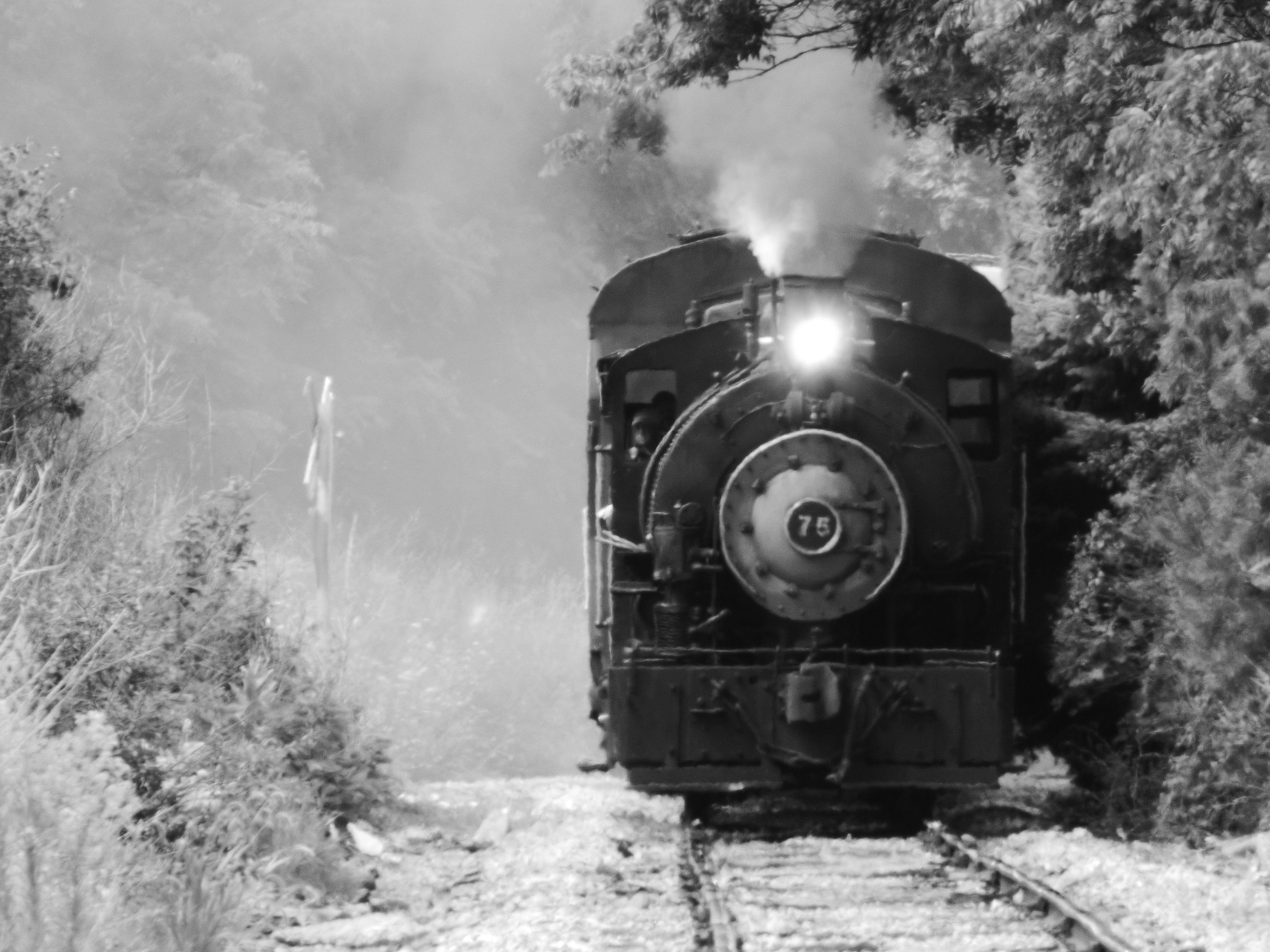 Steam Railroad Institute Owosso, MI Flagg Coal 75 Excursion.