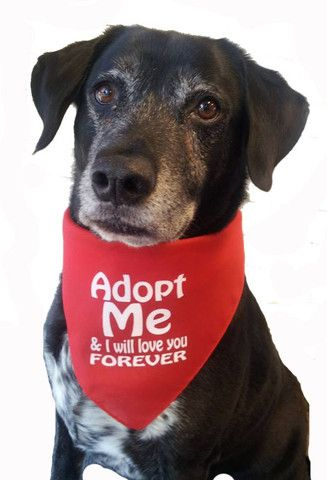 Pin On Adoption Two And Four Legged