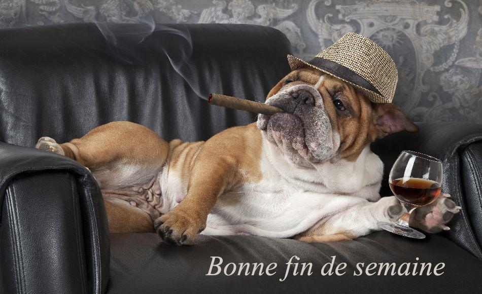 Wallpaper Et Fond D Ecran Chien Relax Cool Bouledogue Anglais Chien Bouledogue