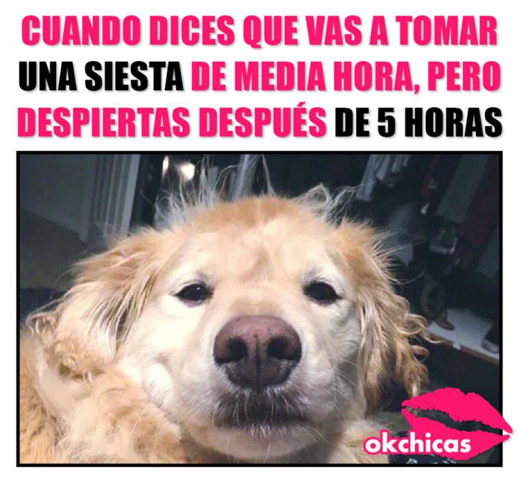 20 Divertidos Memes De Perros Que Te Haran Llorar De Risa Memes Perros Memes De Perros Graciosos Llorando De Risa