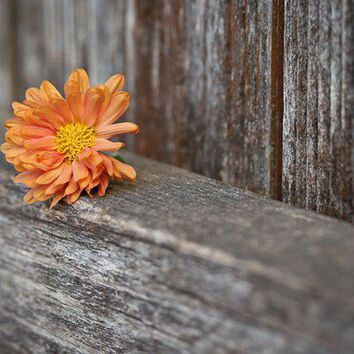 Rustic Flower Wallpaper