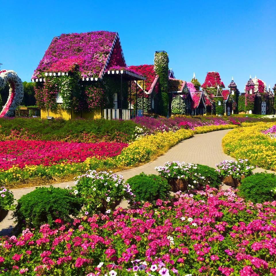 Dubai Miracle Garden dubaigarden Miracle garden