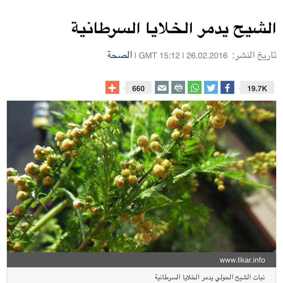 اكتشف العلماء ان نبات الشيح قادر على تدمير الخلايا السرطانية بسرعة اكتشف علماء من جامعة كاليفورنيا الأمريكية ان نبات الشيح الأرطماسيا Herbs Plants Health