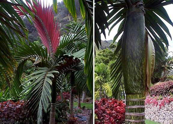 Rare Island Tropical Foliage Homestead