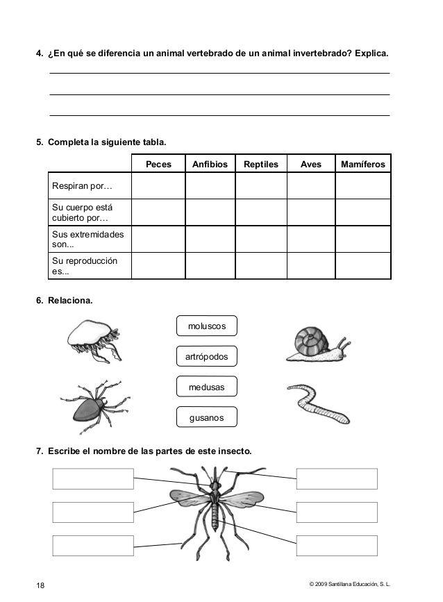 evaluaciones conocimiento del medio 5 fondos de pantalla science nature spanish worksheets. Black Bedroom Furniture Sets. Home Design Ideas