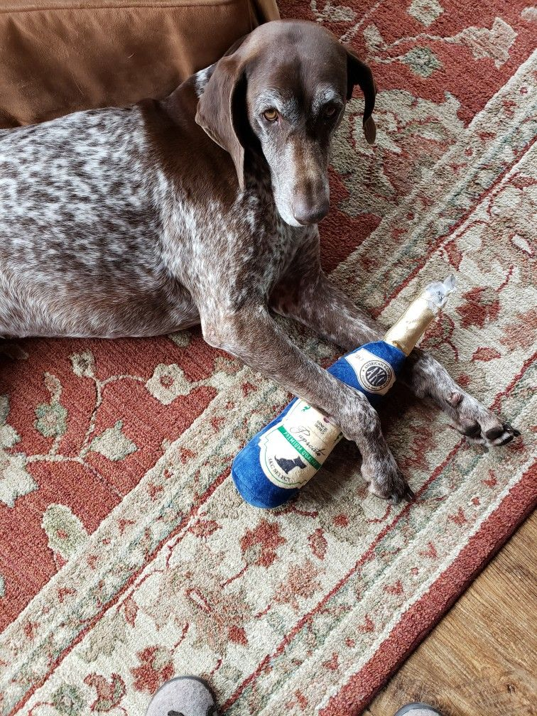 Pin by Barb Bottorff on German shorthair pointers in 2020