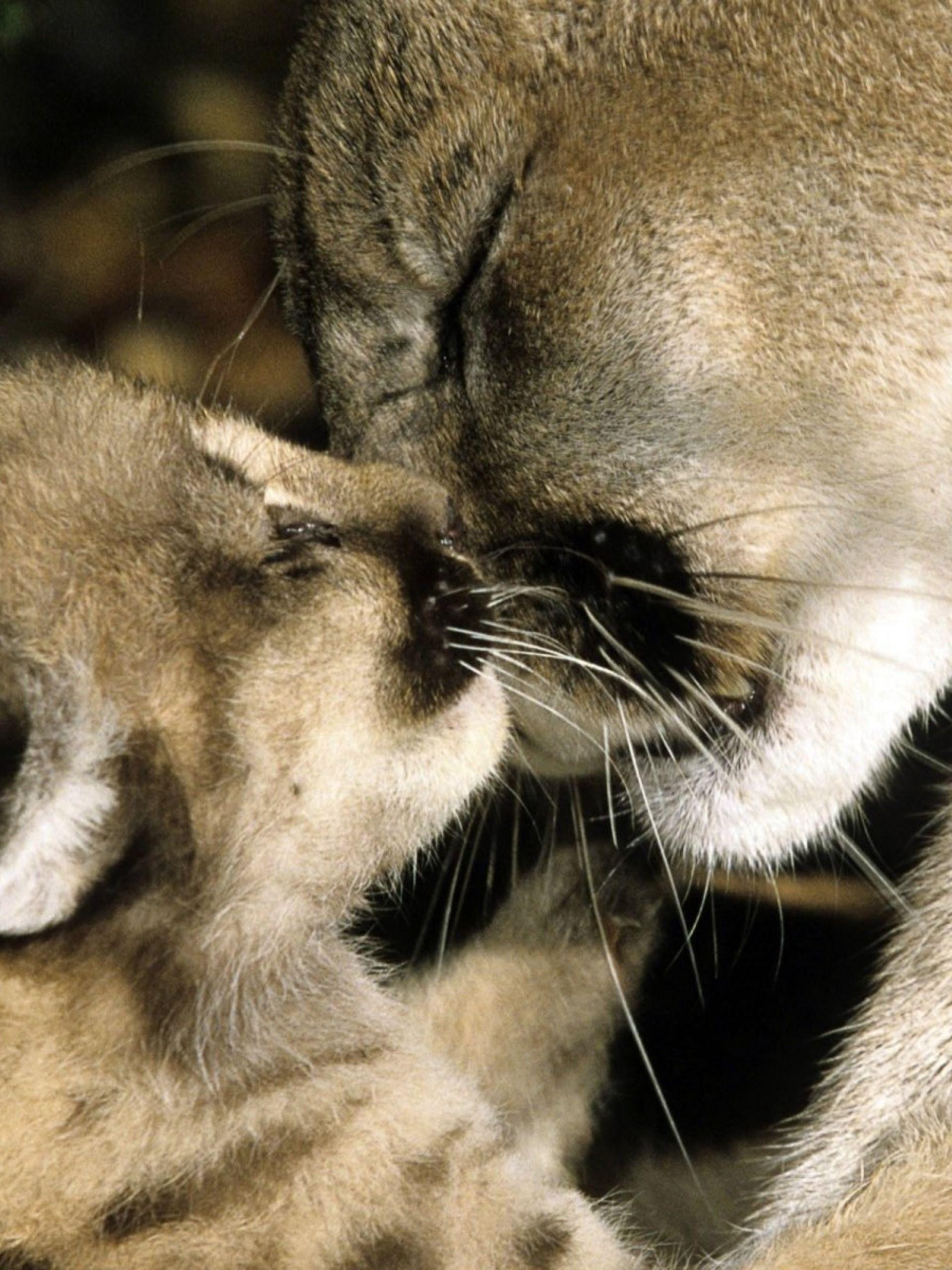 трогательные фото животных с детенышами цветник