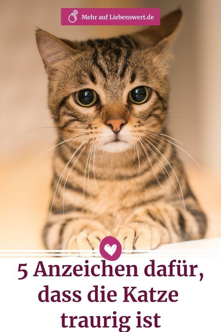 Ob Die Katze Traurig Ist Oder Einfach Mude Ist Nicht Immer Leicht