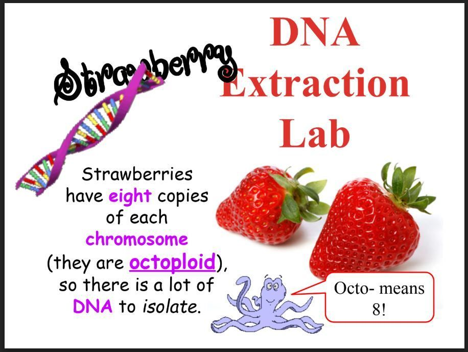 Strawberry Dna Extraction Lab Dna Activities Dna Project Dna Extraction Lab