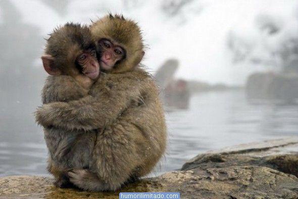 Dar e ganhar um abraço bem apertado para aliviar o coração. Não tem que ser de pessoas conhecidas. Experimente pedir um abraço. Muito bom dar e receber.
