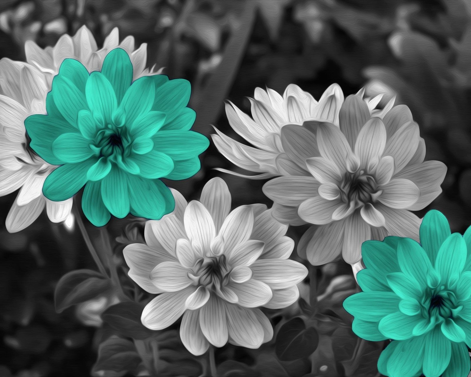 Black White Turquoise Flowers Modern Wall Art Home Decor Matted Picture  Status: Available!  ...