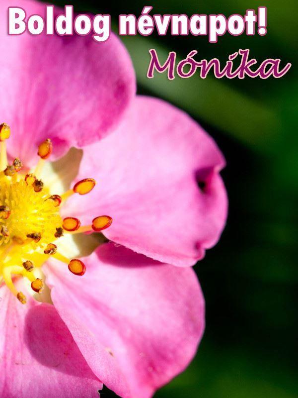 boldog születésnapot mónika Boldog névnapot, Mónika! | Névnaptár | Pinterest boldog születésnapot mónika