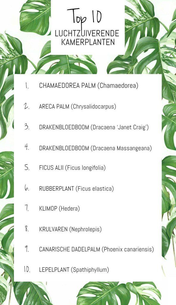 Luchtzuiverende planten - bloemen | Pinterest - Planten ...