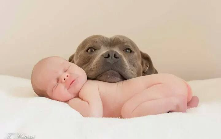 Photos From Underdogs Pitbull Rescue S Post Underdogs Pitbull