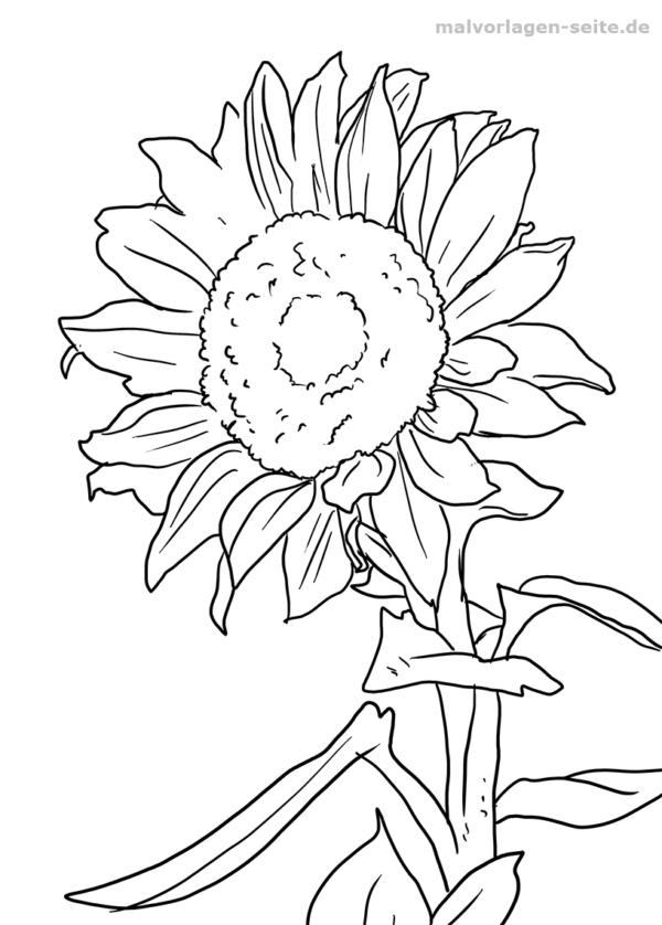 Malvorlage Sonnenblume Pflanzen - Kostenlose