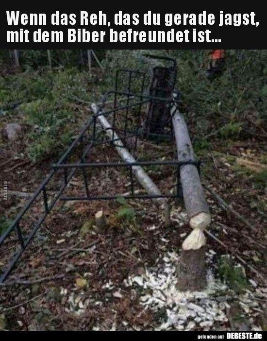 Photo of Wenn der Hirsch Sie mit dem Biber jagen .. | Lustige Bilder, Sprüche, w …