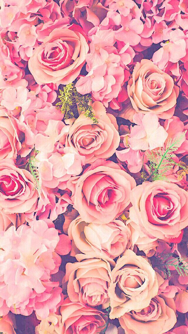 Wallpaper Light Pink FlowersRose