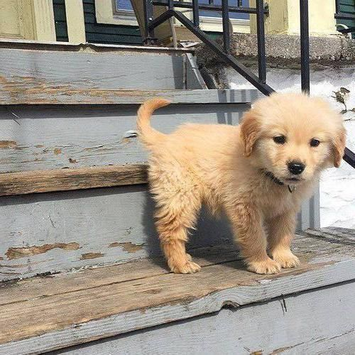 Photo of What a cute puppy !!!!! – #a # for # sweet #puppy