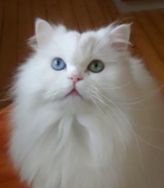 Blue & Green Eyes