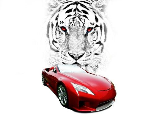 Tiger and cool car