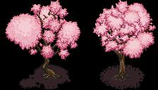 Cherry Blossom Trees Cherry Blossom Tree Blossom Trees Sakura Tree