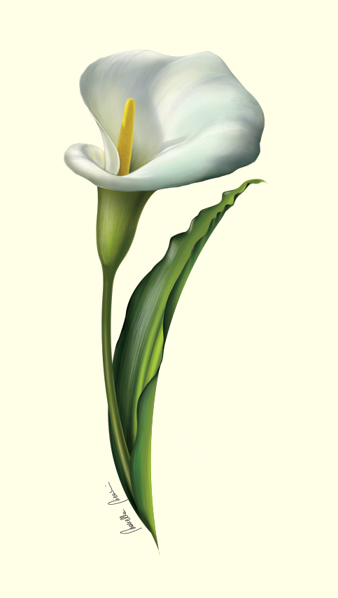 Flower Design Invitation Cards Calla Lily Penelusuran Google Calla Lily Flower Drawing Design Flower Drawing