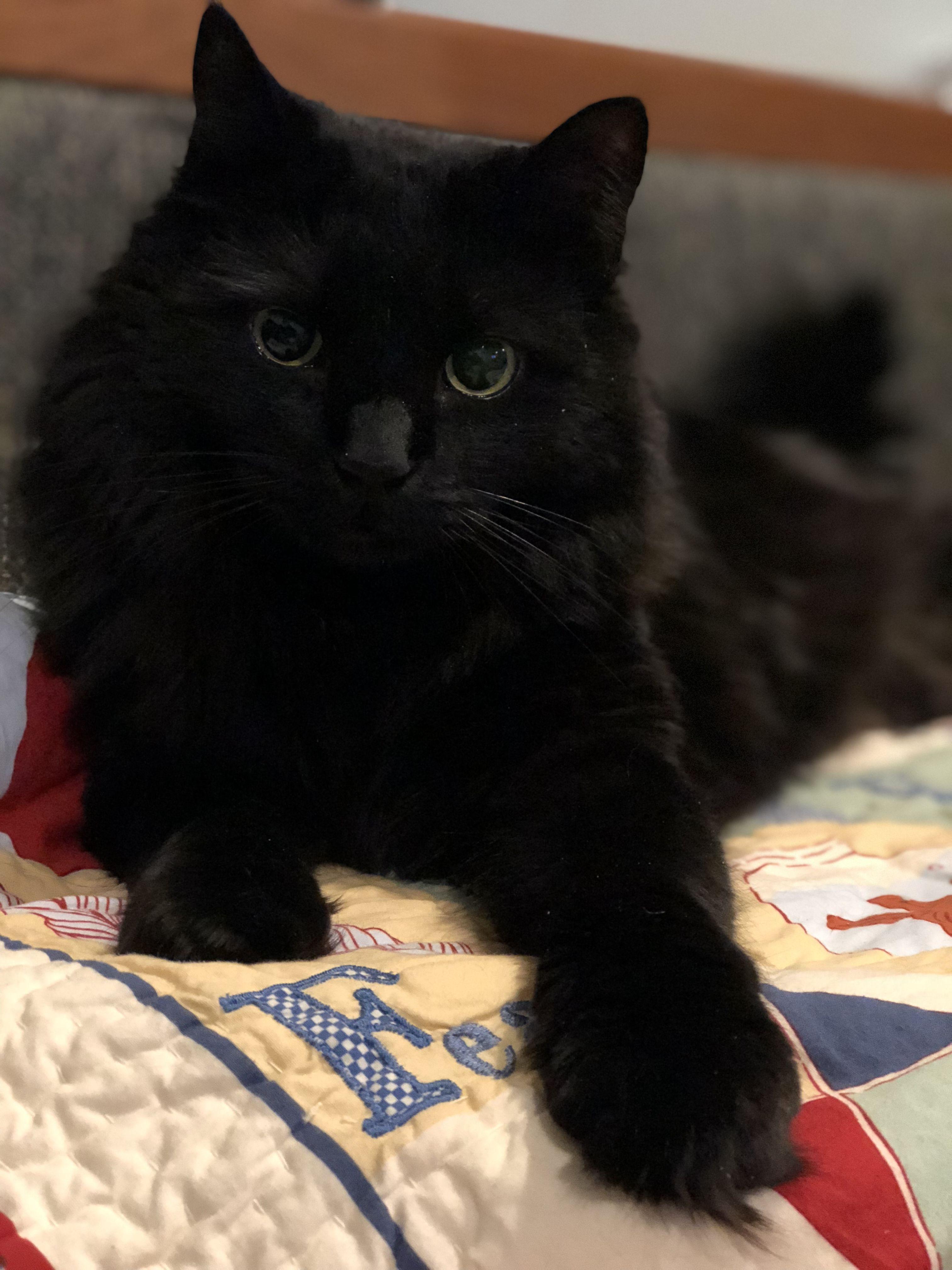 Joker Black Cat Lovers Black Cat Lover Kitten Care Pretty Cats