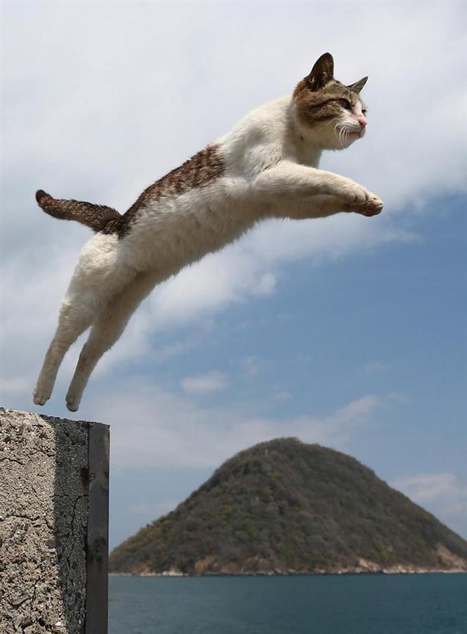 足をきれいに揃えてジャンプ!これは高い飛型点か?