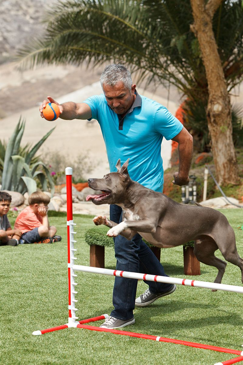 Training Session With Junior And Cesar Millan On Easyturf At The