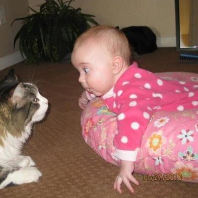 Staring contest...